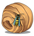 the hornet or wasp nest vespiary isolated on vector image vector image