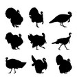 turkey silhouette set vector image vector image