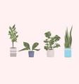 various house indoor garden plants in different vector image vector image