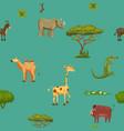 animals africa rhinoceros giraffe donkey crocodile