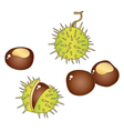 Chestnuts vector image vector image