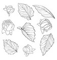 set beautiful black and white dahlia leaves vector image vector image