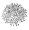 beautiful monochrome black and white aster flower vector image vector image