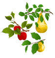 branch apple tree with red apples and pears vector image