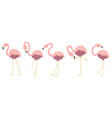 funny flamingos in different poses collection vector image