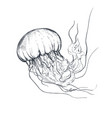 hand drawn jellyfish in sketch style vector image