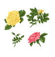 set pink yellow roses bouquets flowers and vector image