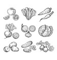sketch vegetables fresh tomato cucumber and vector image