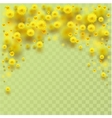 Yellow fluffy mimosa flowers fall vector image vector image