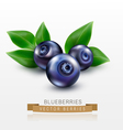 three blueberries with green leaves isolated vector image