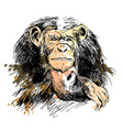 Colored Hand drawing Chimpanzee vector image