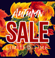 bright banner with autumn sale promotion vector image vector image