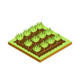 seedlings on bed isometric 3d icon vector image vector image