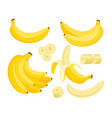yellow banana colorful flat vector image