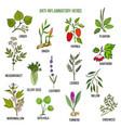 anti-inflammatory herbs hand drawn set of vector image vector image