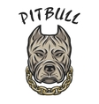 head of a pit bull with a chain vector image