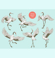 set cranes standing with spread wings from vector image