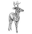 vintage style woodcut stag deer vector image
