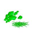 A Group of Fresh Kaffir Lime Leaves vector image vector image