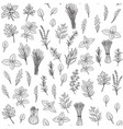 herbs and spice seamless pattern vector image