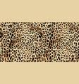 leopard seamless pattern design vector image vector image