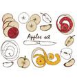 apples set vector image vector image