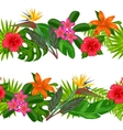 Seamless horizontal borders with tropical plants vector image