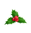 christmas ilex with red berries vector image
