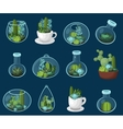 Colorful cactus and succulent set vector image