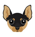 cute chihuahua dog avatar vector image