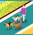 dogs walking isometric background vector image vector image