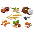 Isolated nuts seeds and cereal ears vector image vector image
