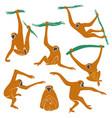 set funny gibbon monkey icons vector image vector image