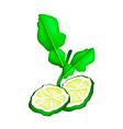 Sliced Kaffir Lime Fruit on White Background vector image vector image
