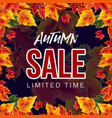 stylish banner with autumn sale promo vector image vector image