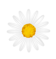 White Daisy Flower on A White Background vector image vector image
