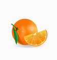 realistic fresh orange fruit isolated vector image vector image