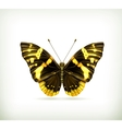 Butterfly icon vector image