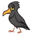 sad grey crow on white background vector image vector image
