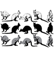 Set of kangaroo on a white background vector image