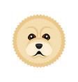 cute chow chow dog avatar vector image vector image