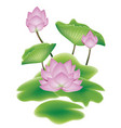 lotus flower with leaves vector image
