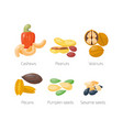 piles of different nuts peanut walnut cashew vector image vector image