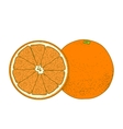 Sliced orange fruits vector image vector image