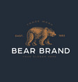 logotype bear vector image vector image