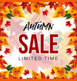 modern banner for autumn sale vector image vector image