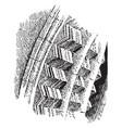 chevron molding type of fancy roman architecture vector image vector image