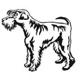 decorative standing portrait of schnauzer vector image vector image