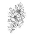 hand drawn dog-rose branch with flowers and leaves vector image vector image