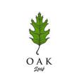 Hand drawn oak leaf designs